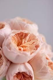 keira garden rose best of pink garden roses pink