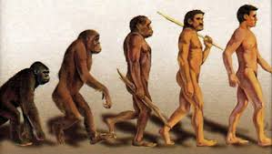 notes on darwin s theory of natural selection of evolution evolution