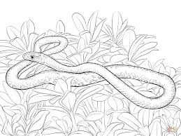Small Picture Black Racer Snake coloring page Free Printable Coloring Pages
