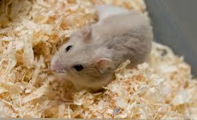 hamster bedding superpages