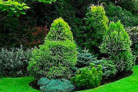 Small Picture Types of Evergreens for Landscaping Trees and Shrubs