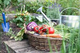 tips for growing a vegetable garden for beginners experts and everyone in between canadian living