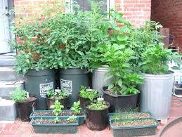 apartment vegetable garden. balcony vegetable garden apartment patio small container gardening exterior growing uk n