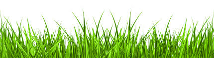 grass png. Perfect Grass Grass Png Graphic Download With Png