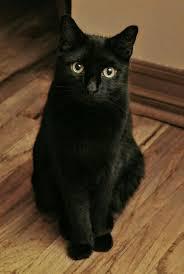 black cats with yellow eyes kitten. Fine Cats Black Cat Cats And Kittens Kittens Cutest On With Yellow Eyes Kitten