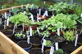 beginner gardening. Gardening Guru And Mastermind Behind The Carefully Curated Online Store What You Sow, Lyndsey Haskell, Shares Her Top Four Tips For Beginner Gardeners. E