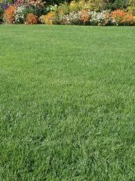 grass. Brilliant Grass Classic Grass Seed With E