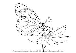 drawing butterfly pictures. Perfect Drawing How To Draw A Butterfly On Flower On Drawing Pictures O