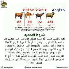 هنا شروط الأضحيه و اجتهدنا في... - oman_livestock_market