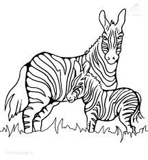 zebra coloring book zebra pictures to print and color excellent zebra coloring pages for coloring pages