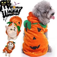 Lovely CHARMCZ Halloween Costumes Pets Dogs Cats Halloween Party Skeleton Dog  Costume Wizard Witch Cloak Cosplay Apparel