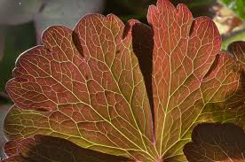 2016 966 01 htm similar leaf venation in botanic