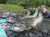 catfish provencale