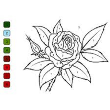 two cherokee rose coloring pages rose color by number picture