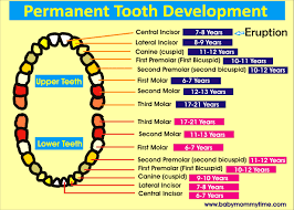 Permanent Teeth Eruption Chart Baby Primary Permanent Tooth Eruption Chart