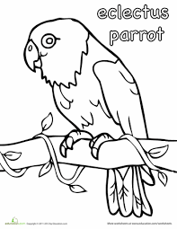 worksheets eclectus parrot coloring page