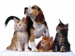 dogs and cats wallpaper. Interesting Wallpaper In Dogs And Cats Wallpaper O