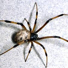 how to kill spiders in house. Spider Control Wayne, NJ How To Kill Spiders In House