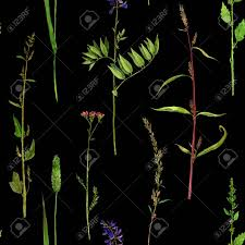 ilration seamless pattern with watercolor drawing flowers at black backdrop hand drawn wild herbs background with painted plants botanical