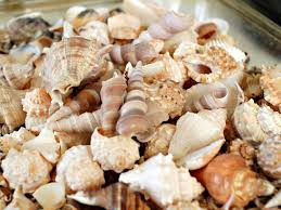 How to Make a Seashell Mirror | HGTV