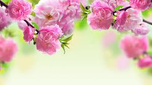 desktop background hd flowers. Exellent Desktop Spring Flowers Background Hd Desktop 10 HD Wallpapers With L