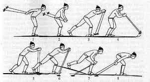 Реферат Лыжный спорт doc 1 После окончания одновременного толчка руками лыжник скользит на двух лыжах в согнутом положении и медленно выпрямляясь начинает выносить палки вперед
