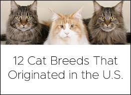 How To Convert Your Cats Age To Human Years Litter Robot Blog