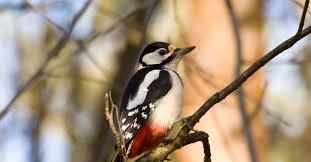 Птицы <b>зимнего</b> леса