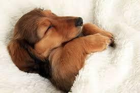 「睡眠画像」の画像検索結果