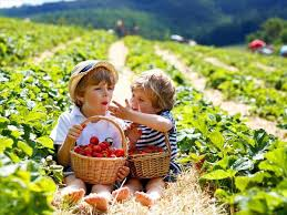 Agriturismi in Calabria per bambini | Vacanzeconbimbi.it
