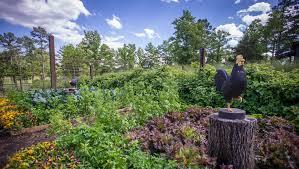 Kitchen Garden Preserves Vegetable Garden Archives P Allen Smith
