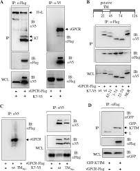 Kaposi s Sarcoma Associated Herpesvirus K7 Induces Viral G Protein.