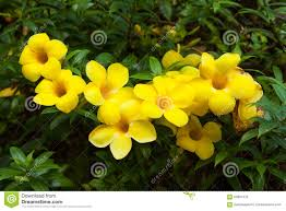 color flowers plant yellow with yellow flowers names and pictures