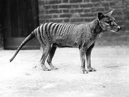 species revival should we bring back extinct animals