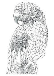 Bird Coloring Pages To Print Trustbanksurinamecom