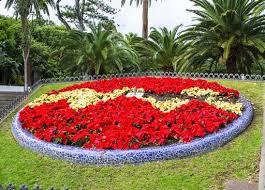 Imagini pentru flori de strat