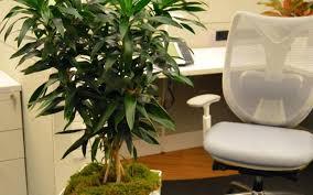 modern office plants. Stunning View Larger Image Office Plants Modern Best Flowering A