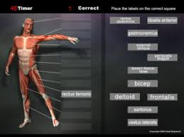 Anatomy Games Real Bodywork