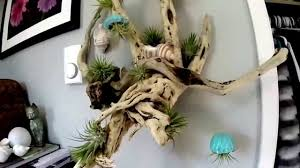 Air Plant Display Air Plant Driftwood Display With Shells And Charms Youtube