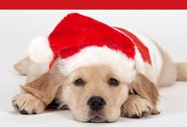cute christmas puppies. Brilliant Cute Cute Christmas Puppy For Puppies