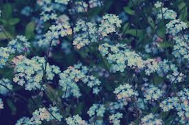 blue flowers background tumblr. Exellent Background Blue Flowers Tumblr Background On L