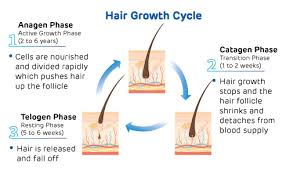 types of hair loss and its causes
