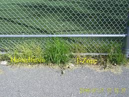 Nutsedge Herbicides Nutsedge Herbicides Test Lawnsite
