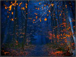 wallpaper autumn, night, forest, road ...