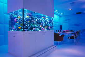 Fun Fish Tank Decorations Kids Fish Tanks Not A Simple Affair Styfishercom