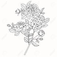 図面バラの花は白い背景の線画でスケッチ
