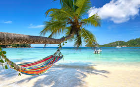 Paradise Beach Palm 2019 Featured Desktop Preview