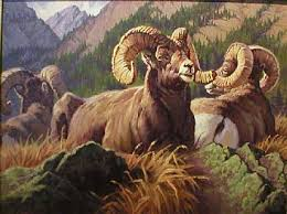 Image result for rams