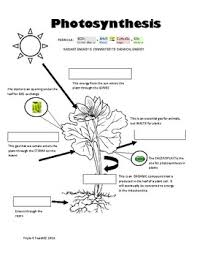 Photosynthesis Diagram Worksheets Teaching Resources Tpt