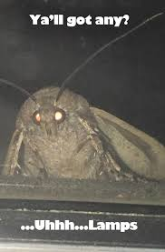 Moth Meme Scented Candle